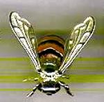Пчела с эмалью средняя ST289-2.