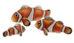 Три рыбы Клоуна серебро с эмалью ST390