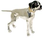 Собака породы Поинтер ST143-1