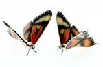 Две бабочки серебро эмаль ST561
